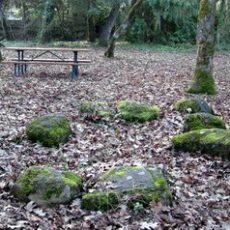 willis-park.jpg